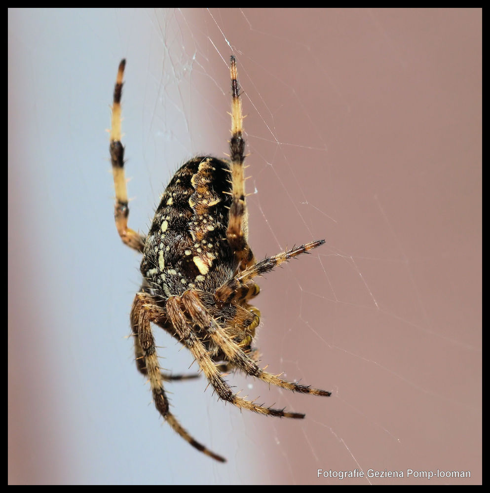 Photo in Macro #spin #spider #close-up #insect