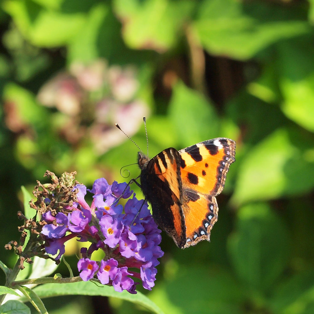 Photo in Random #vlinder #butterfly #flower #bloem #kleurrijk