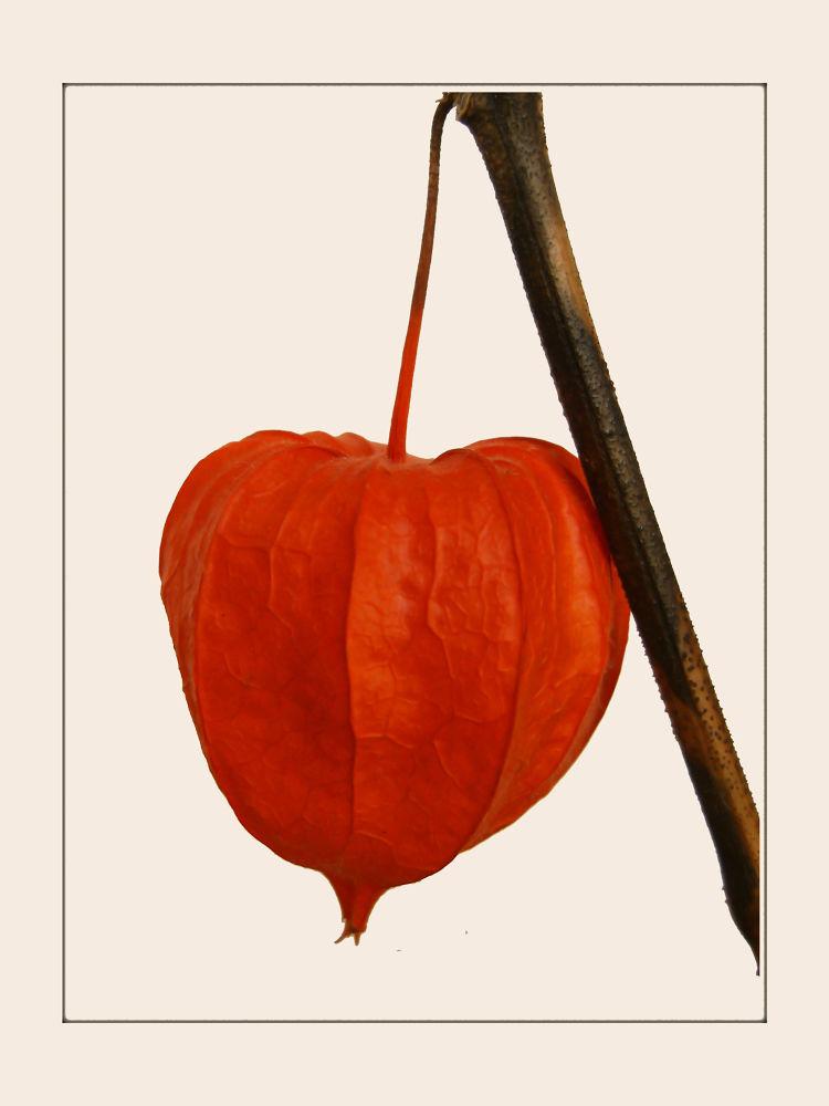 Photo in Random #lampionnetje #oranje #orange