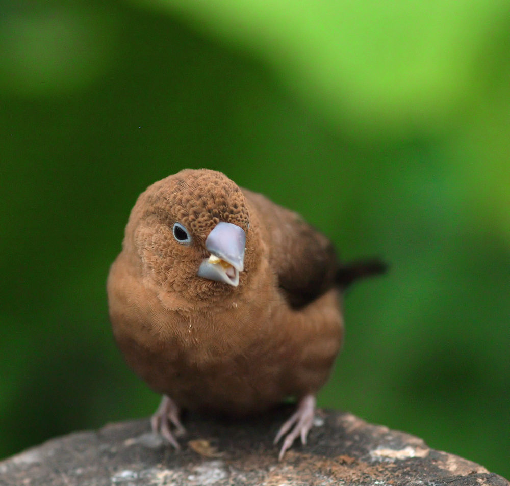 Photo in Random #bird #vogel
