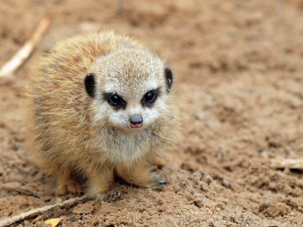 Photo in Animal #emmen #zoo #dierentuin