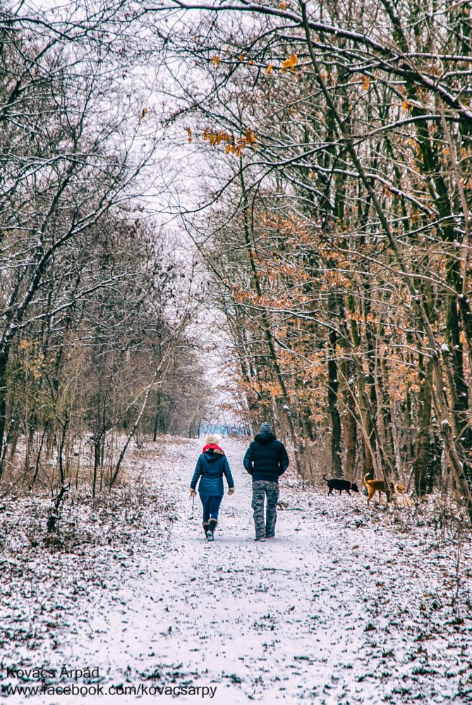 Photo in People #color #winter #white #black #snow #walk #love #pair