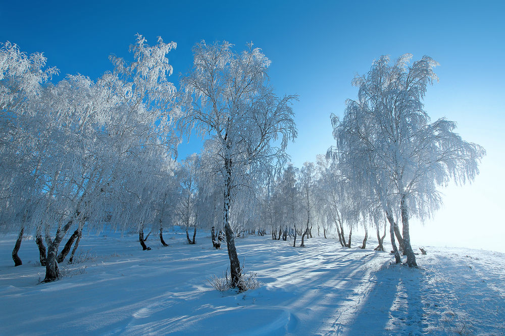 Photo in Landscape #ypa2013 #landscape #nature