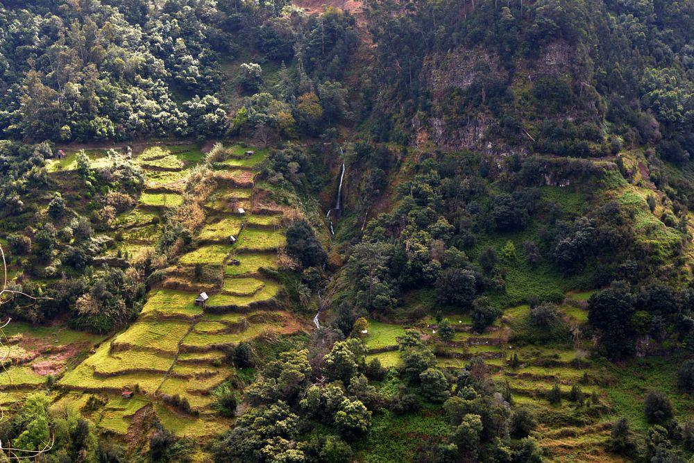Photo in Landscape #madeira #green #fields #levadas
