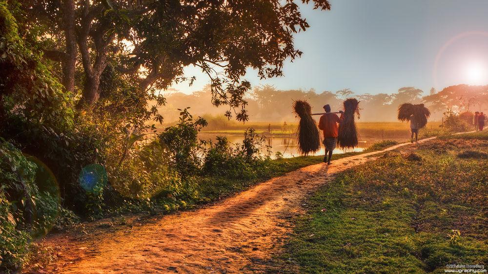Photo in Random #bangladesh #sunset #tarua #village #lifestyle