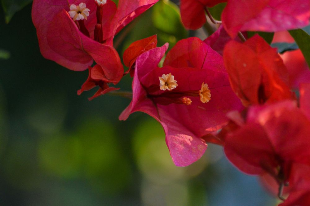 Photo in Macro #flower #face