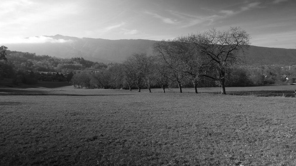 Photo in Black and White #walnut #trees #mountains #monochrome #pasture #black&white #haute-savoie #cloudy