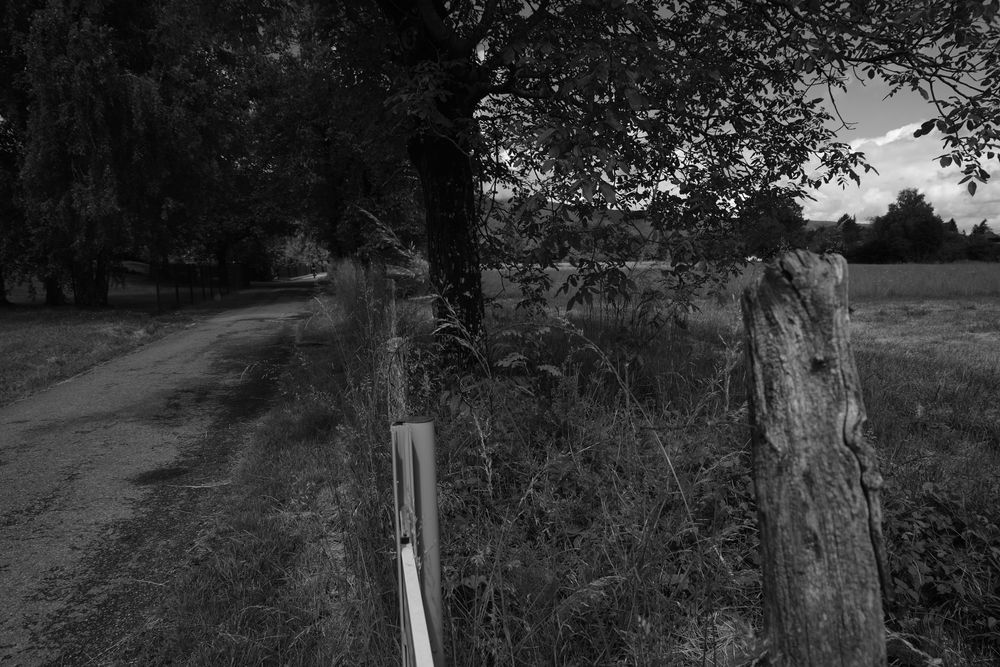 Photo in Black and White #path #monochrome #trees #hte-savoie