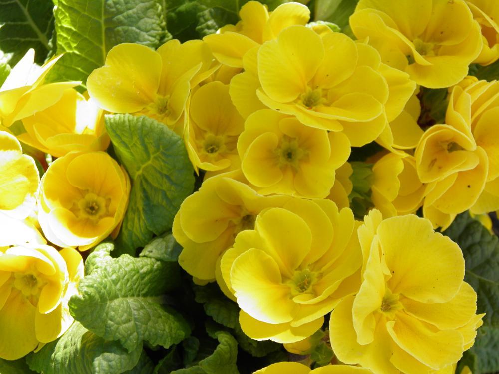 Photo in Macro #beautiful #yellow #flowers