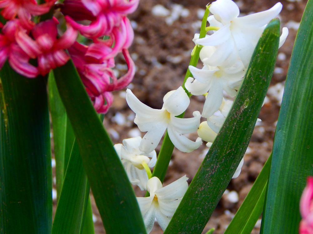 Photo in Random #flowers #macro #nature