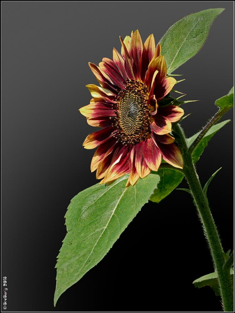 Photo in Nature #onlyliveflower #reallight #realcolors