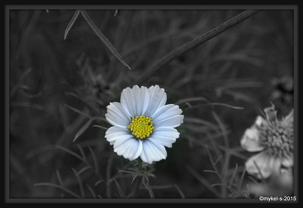 Photo in Nature #flower #photoart #black #white