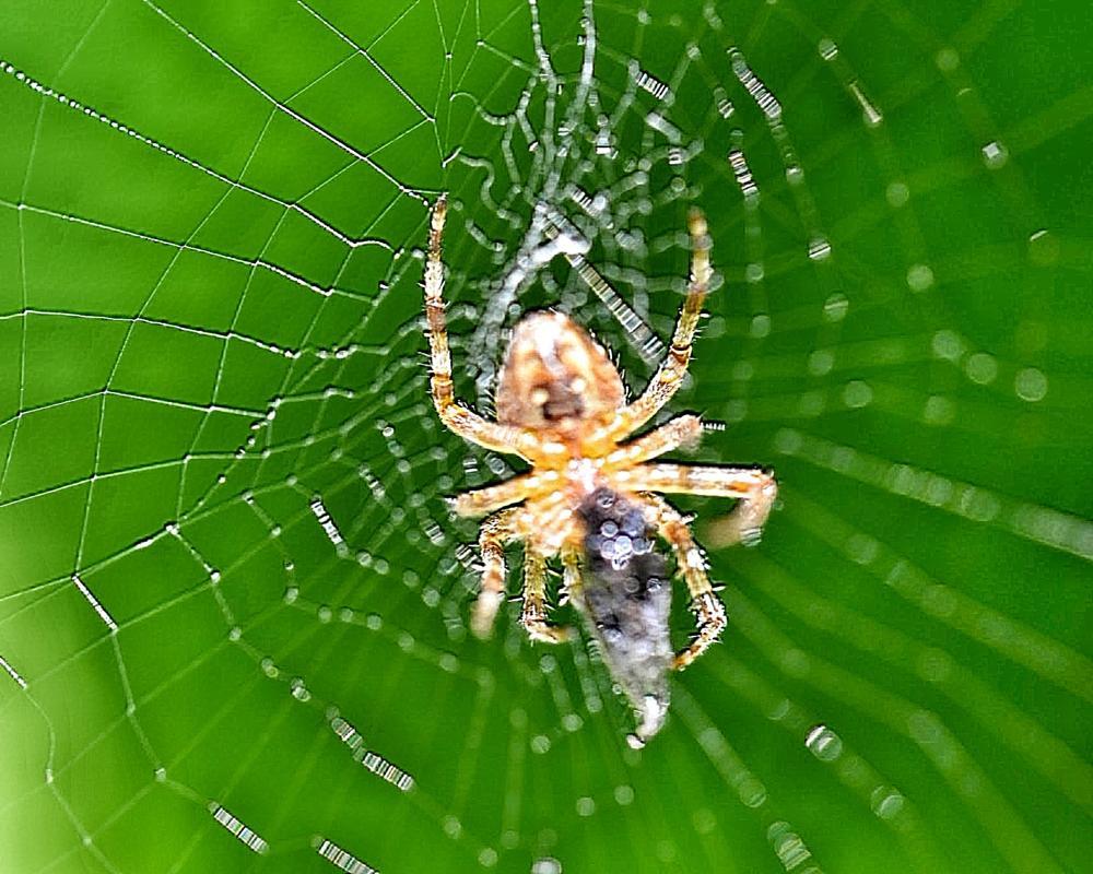 Photo in People #web #spider #macro