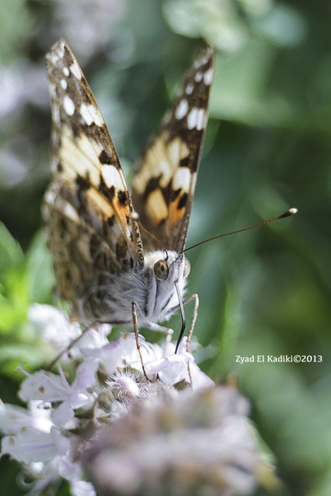 Photo in Macro #macro #butterfly