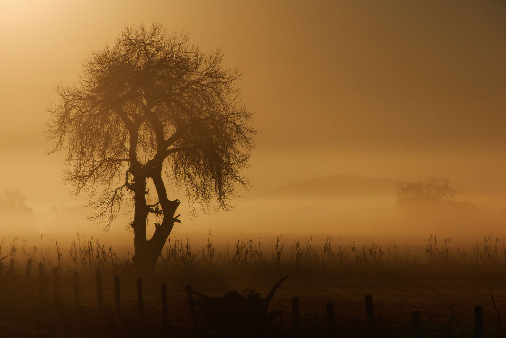 Photo in Random #tree #fog #sunrise