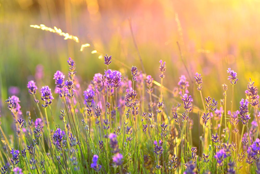 Photo in Nature #purple #flower #nature