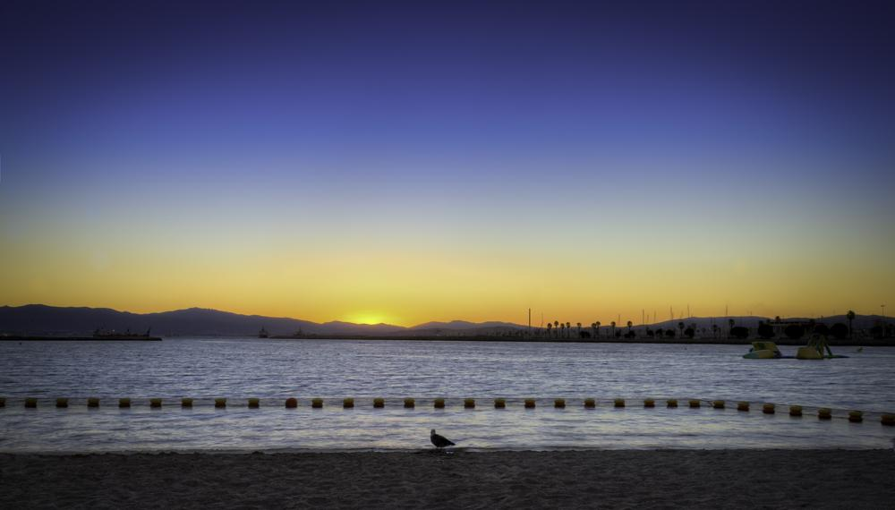 Photo in HDRI #sunset #beach #shore #water #seagull #hdr #sun #evening #nikon #nikon d3s
