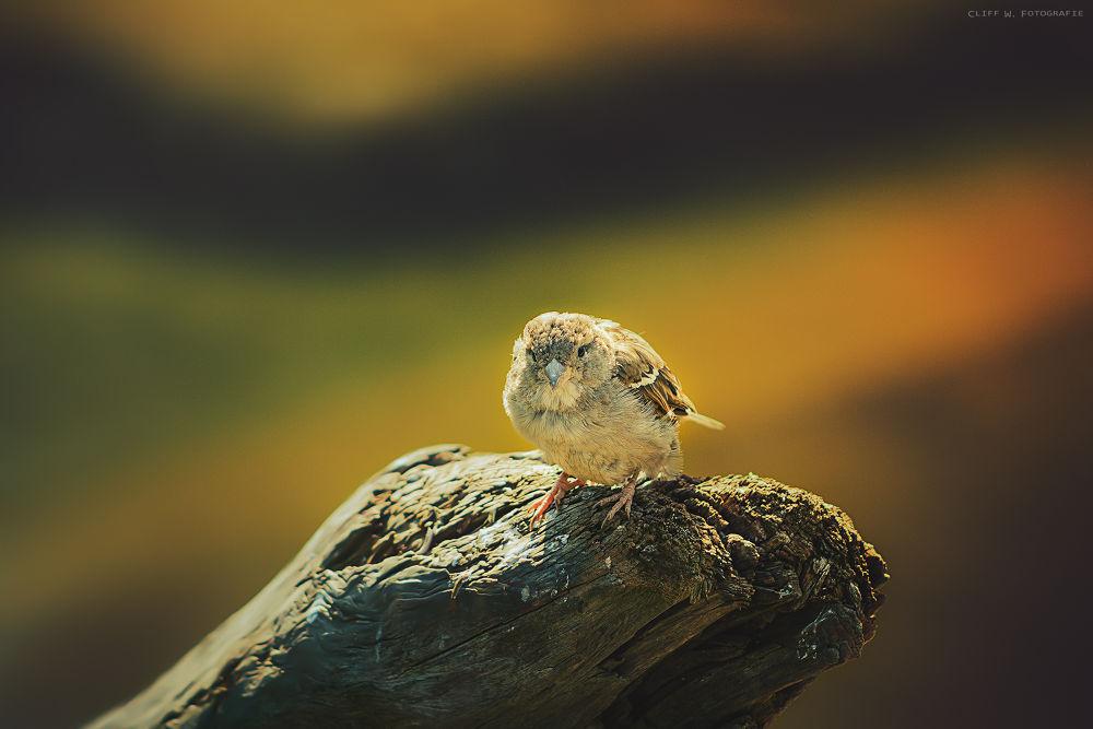 Photo in Animal #ypa2013 #bird #nature #animal #macro
