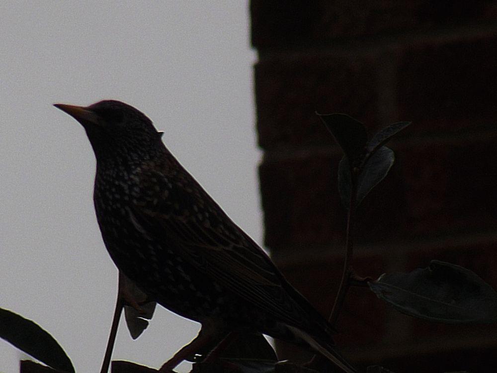 Photo in Random #bird #starling #nature #winter