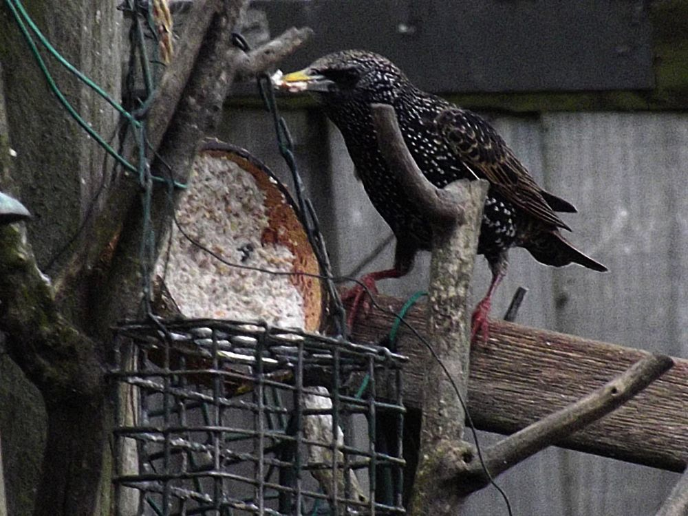 Photo in Random #starling #bird #nature