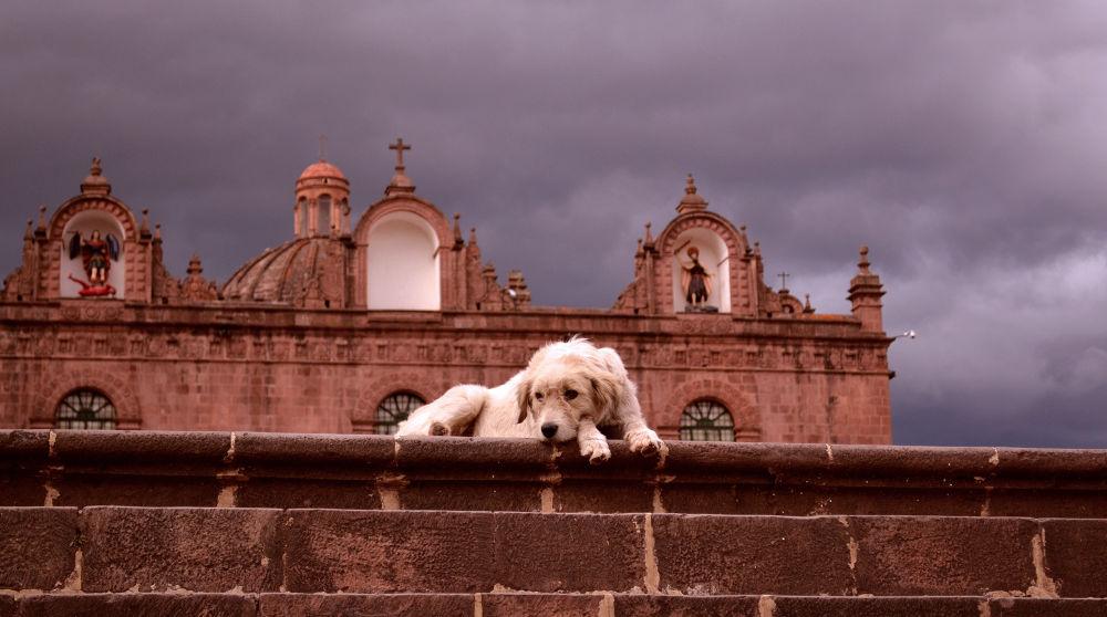 Photo in Cityscape #cusco #cathedral #peru