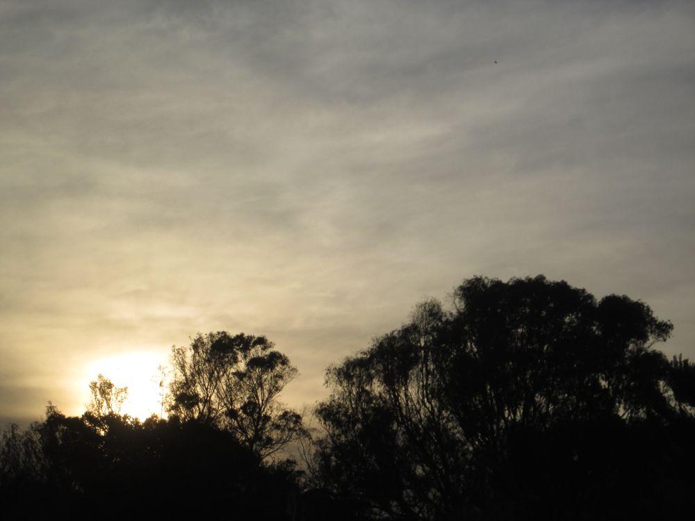 Photo in Random #sunset #winter #trees