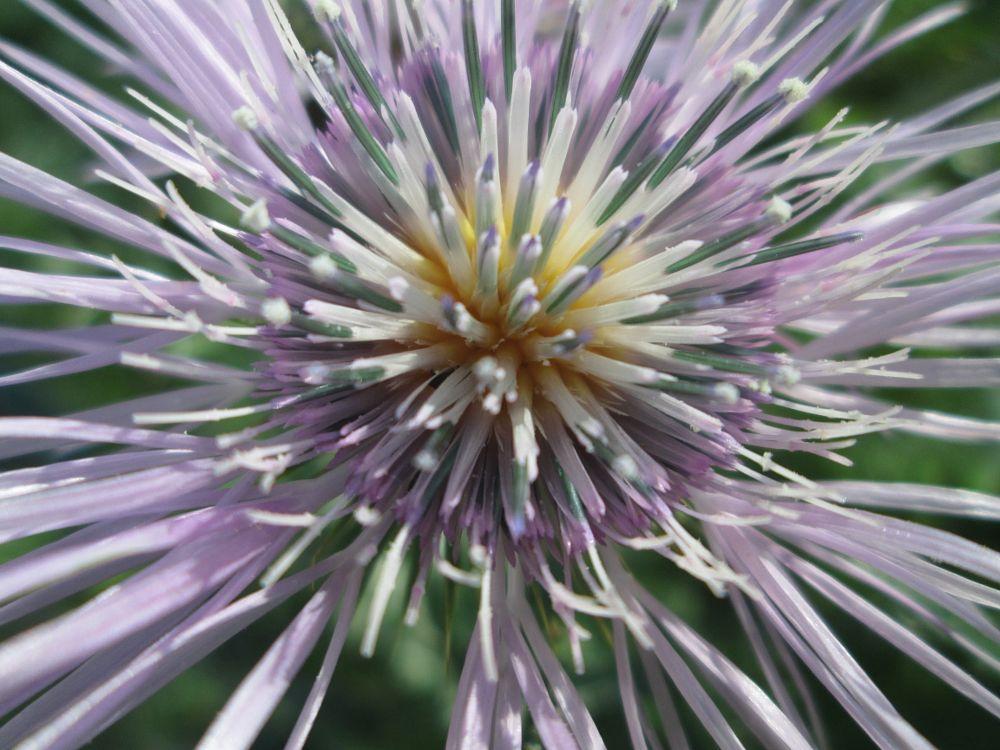 Photo in Random #macro #nature #flower