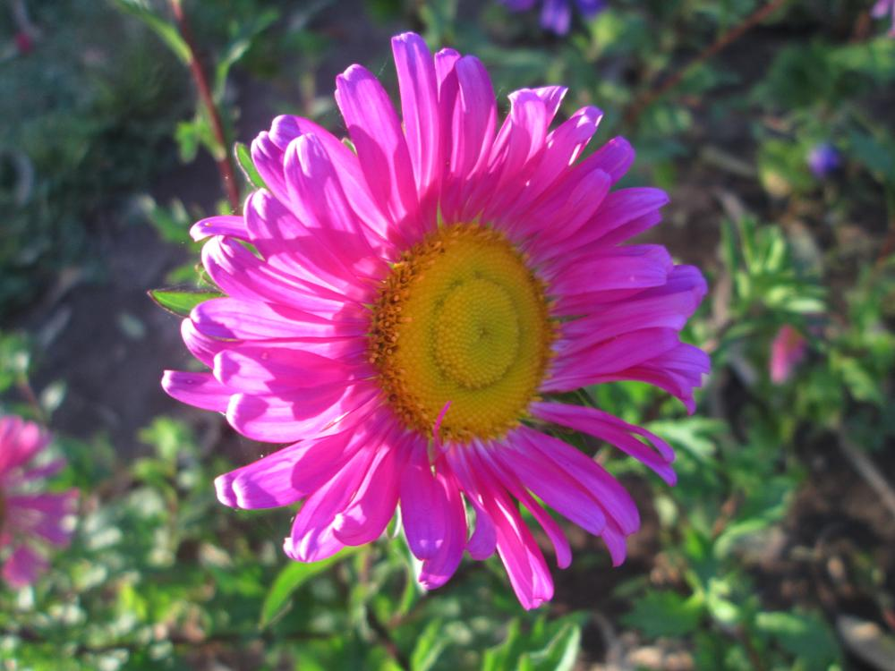 Photo in Nature #pink #flower #sunlight