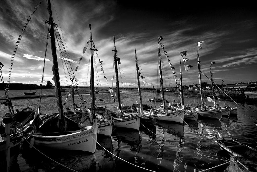 Photo in Black and White #portugal #moita #leicam240 #black and white #monochome