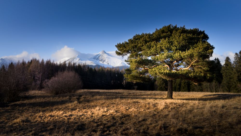 Photo in Landscape #tree #mountains #dof #forest #mengusovce #slovakia #hightatras