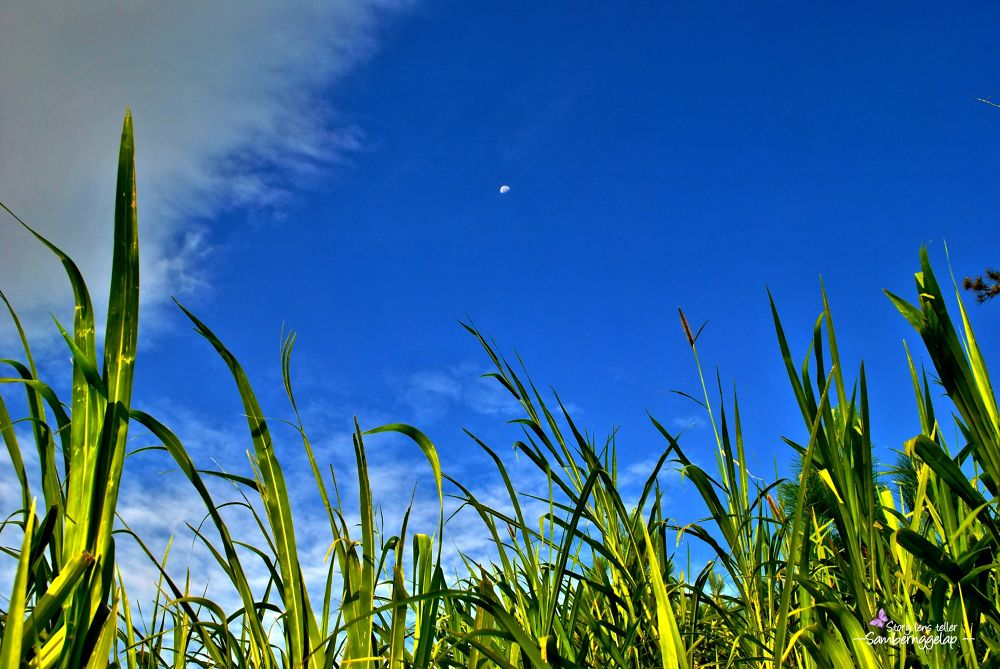 Photo in Random #sky #moon #nature