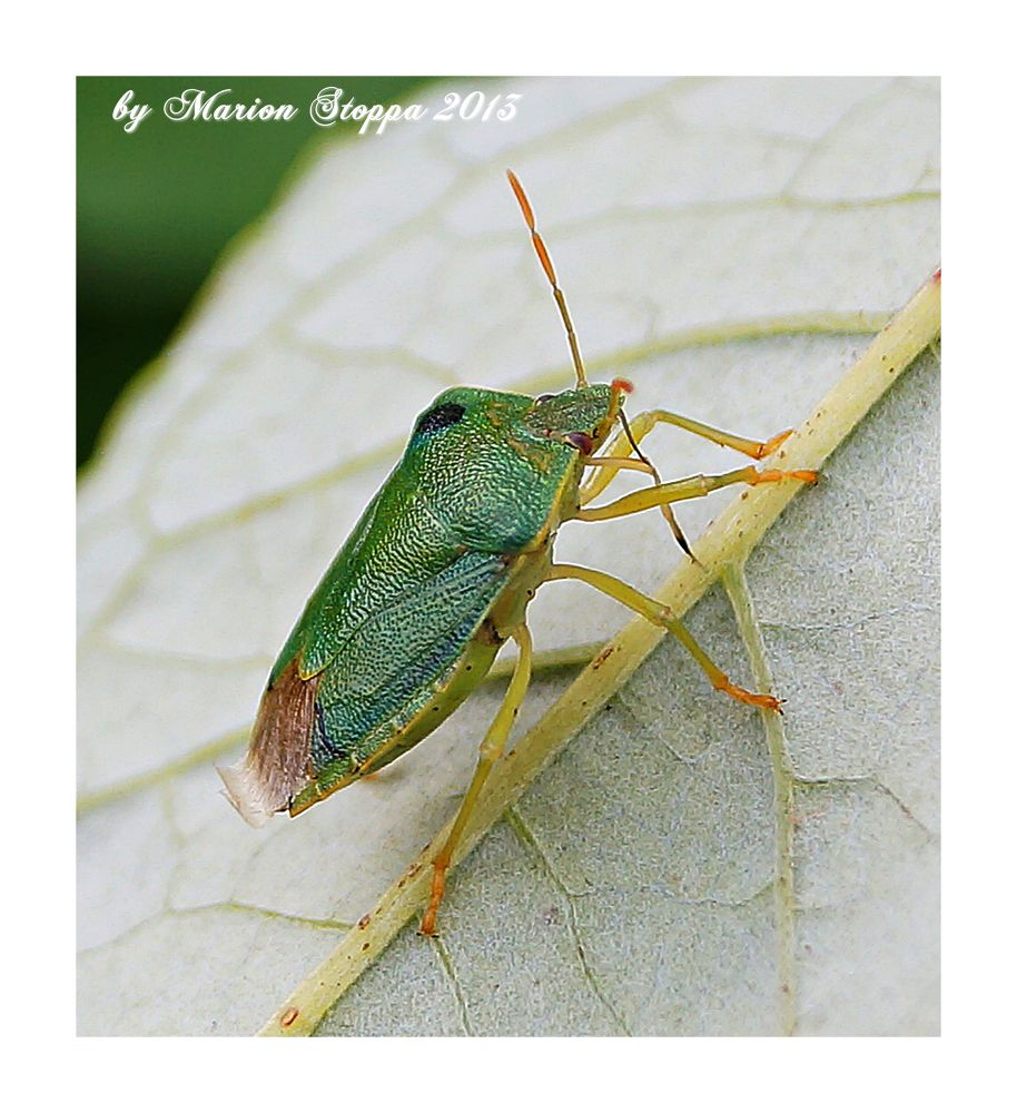 Photo in Animal #animal #insect #nature