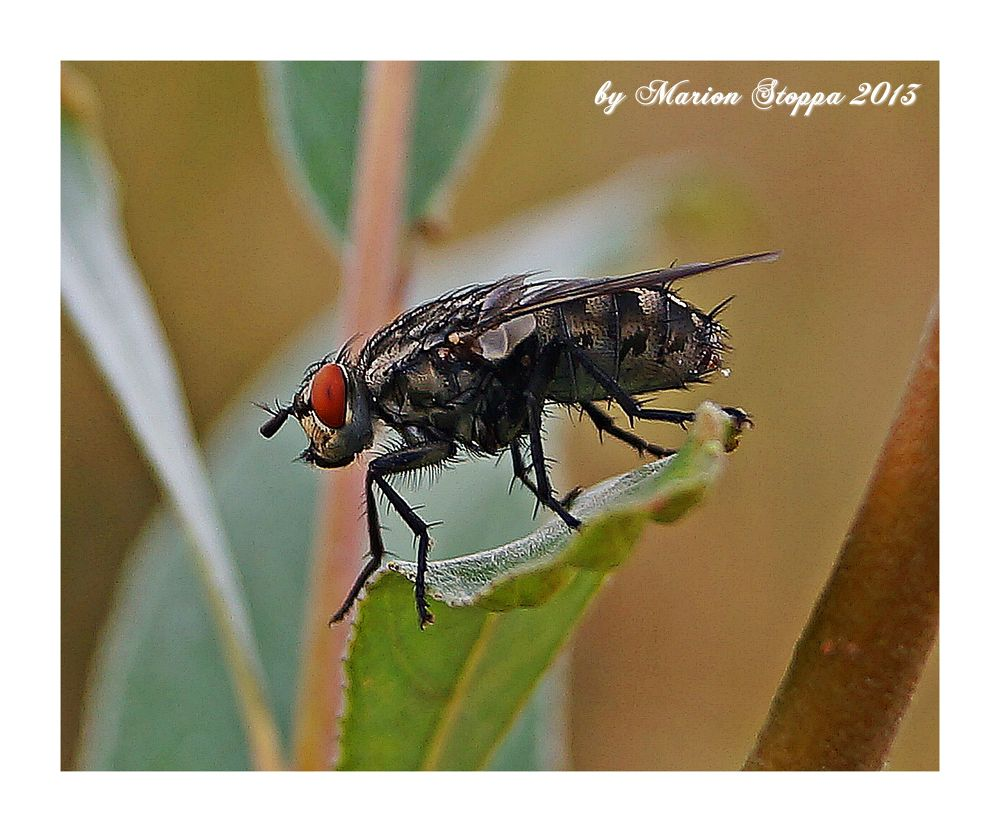 Photo in Animal #animal #nature #insect #macro #bow tie