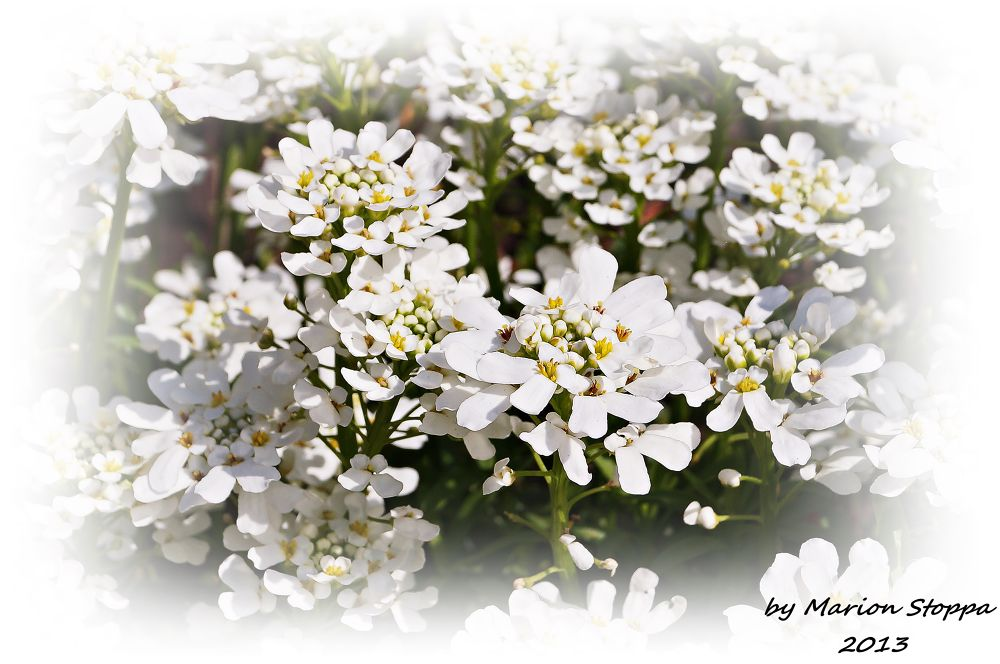 Photo in Nature #flowers #nature