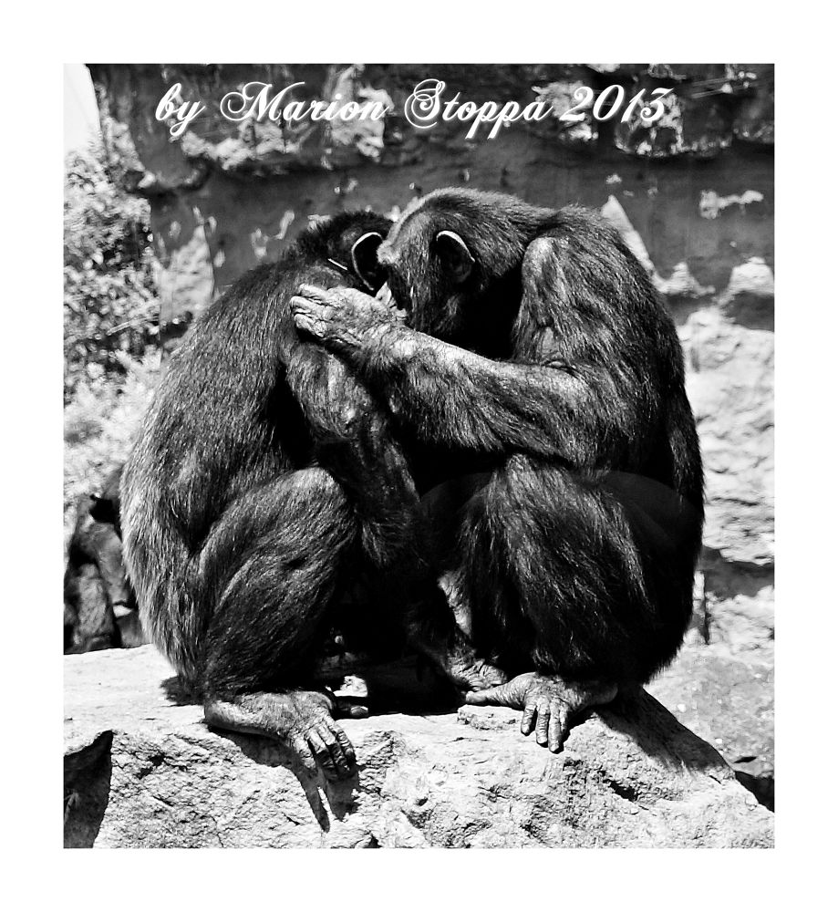 Photo in Black and White #animal #nature #black and white
