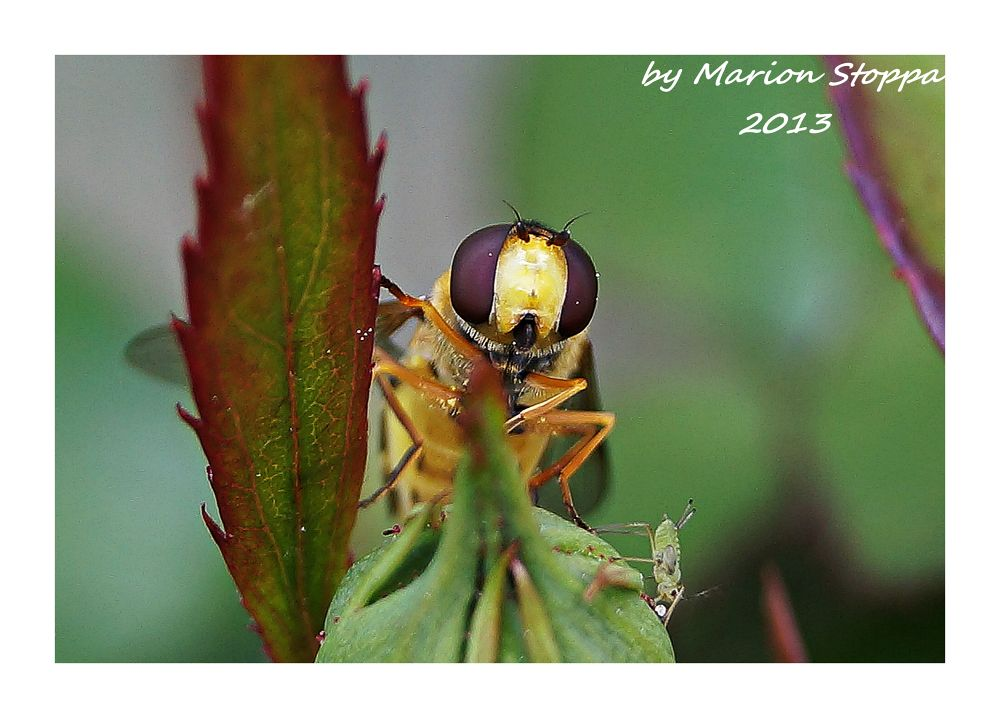Photo in Animal #animal #nature #insect #macro