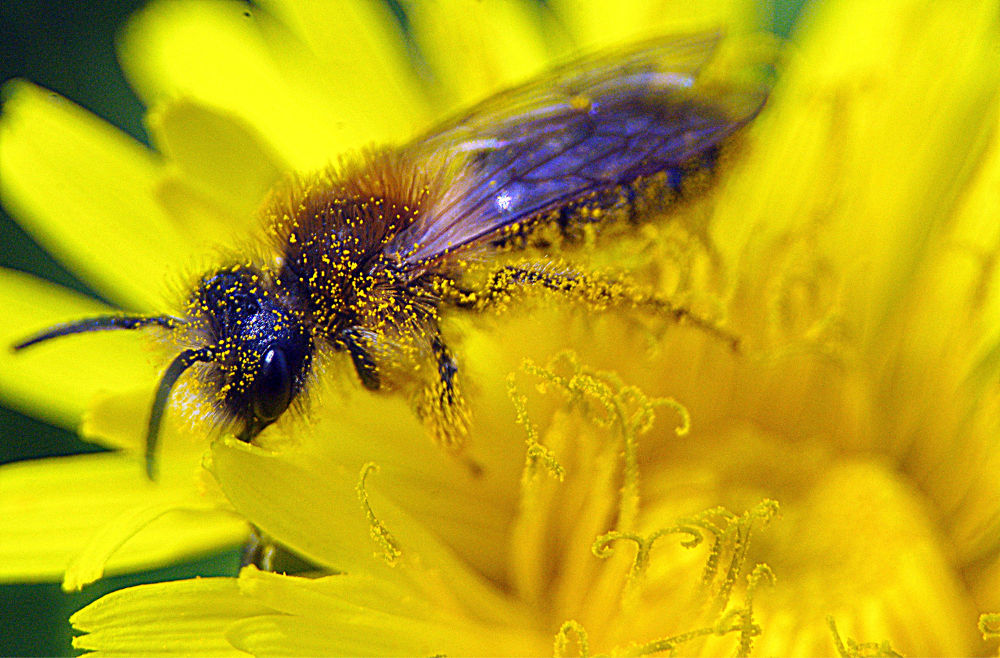 Photo in Macro #macro #flower #fleur #insecte #nature