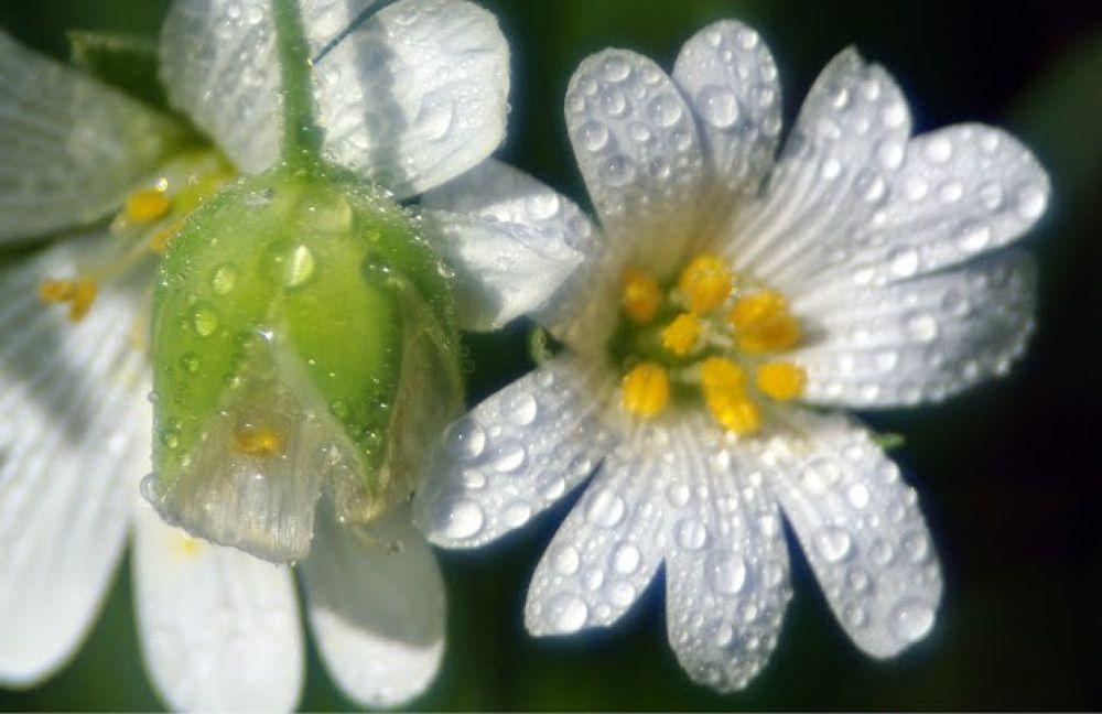 Photo in Macro #macro #nature #flower #fleur