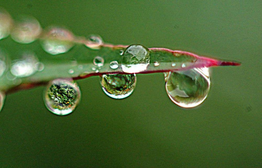 Photo in Macro #macro #nature #eau #water #fleur