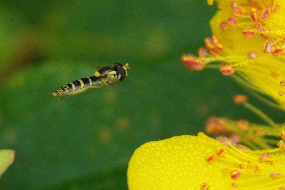 Photo in Macro #macro #nature #insecte
