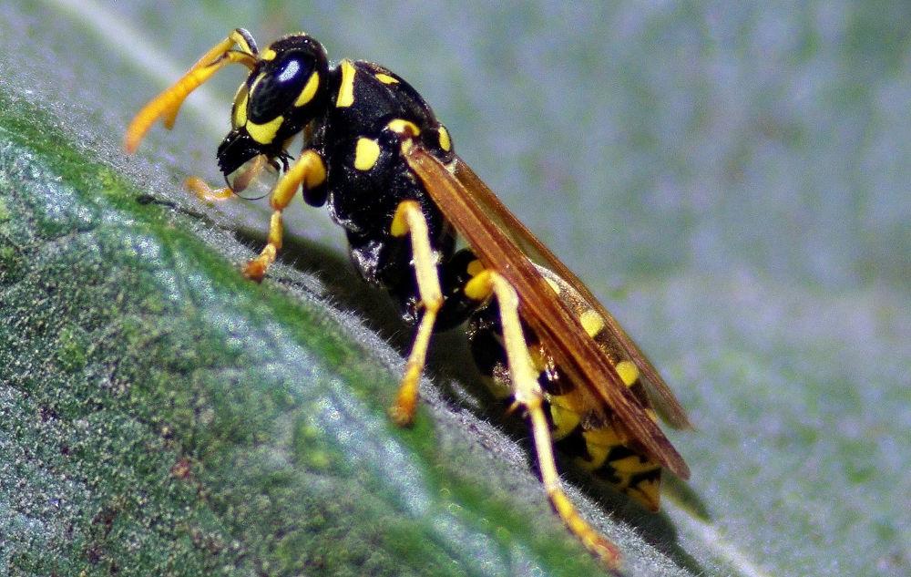 Photo in Macro #nature #insecte #macro