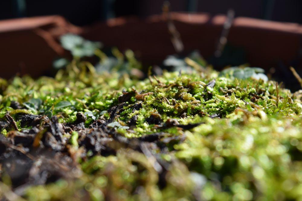 Photo in Macro #macro #moss #nature #green #plant