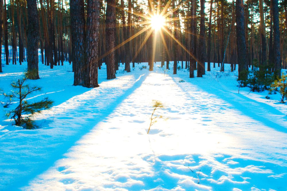 Photo in Landscape #winter #snow #white #cold #sun #ray #light #forest #tree #nature #morning #landscape #russia #зима #снег #белый #холод #солнце #луч #свет #лес #дерево #природа #утро #пейзаж #россия