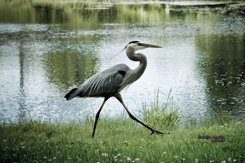 Photo in Random #egret #nature