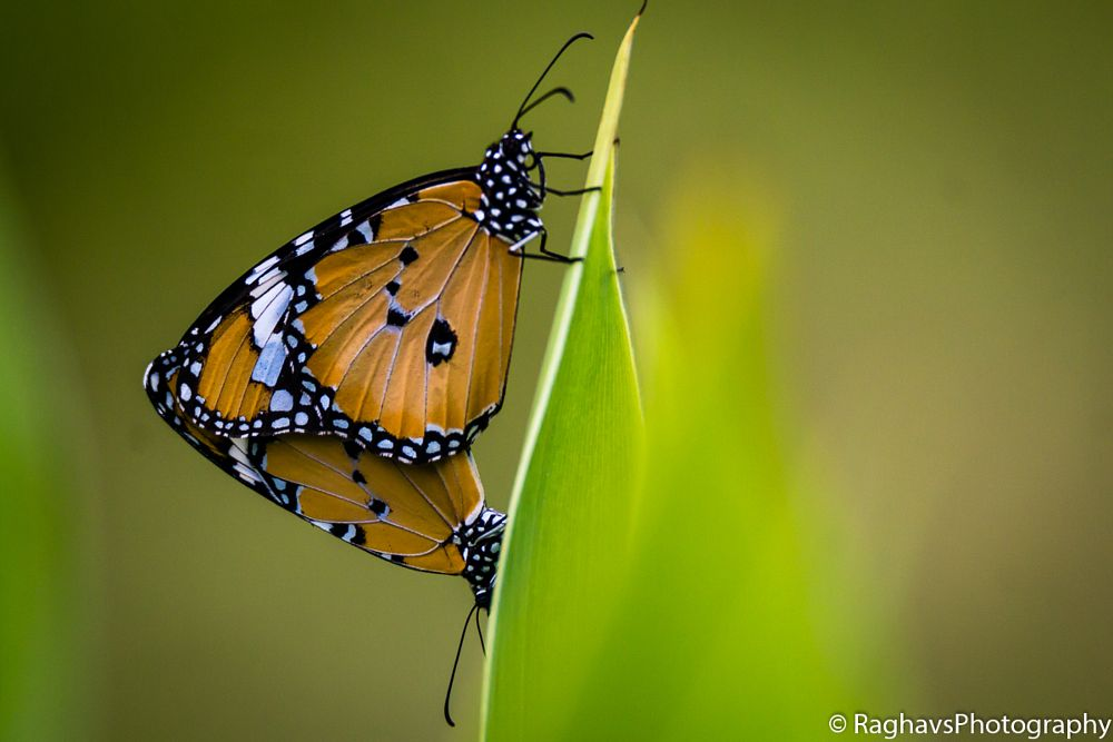 Photo in Macro #butterfly #macro #tamron 150-600