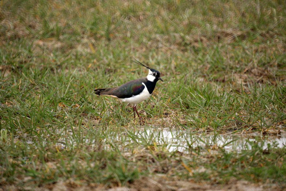Photo in Nature #spring #birds #nature #wildlife #sony