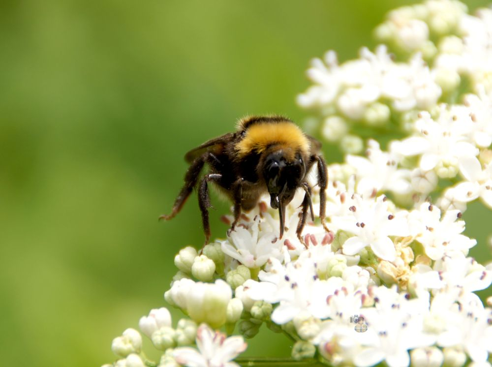 Photo in Nature #bumble bee #nature #wildlife #summer #sony