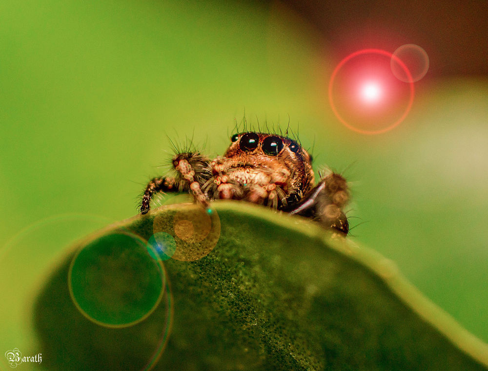 Photo in Macro #cute little macro green