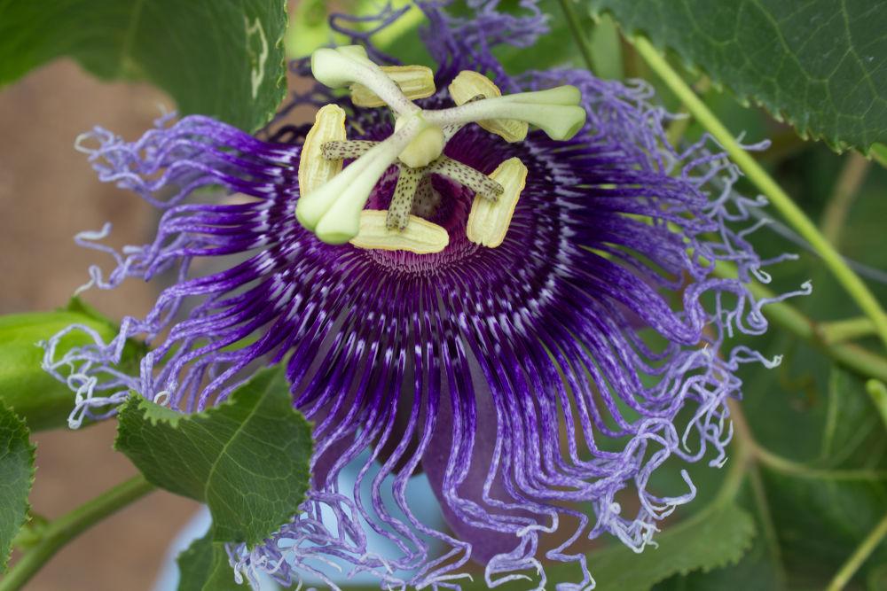 Photo in Random #flower #violet flower #violet flower with green leafs #violet flower top angle