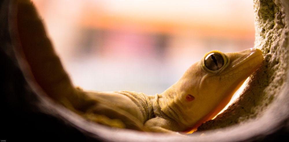 Photo in Animal #lizard #lizard in hole #lizerd in bathroom #lizerd single eye #lizard eye #ypa2013.